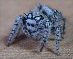 şirin bir örümcek