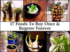 17 Foods To Buy Once And Regrow Forever | Pearltrees