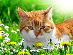 """<a href=""""//www.shutterstock.com/pic.mhtml?id=129975974"""">Young cat lying in the grass</a> by Shutterstock.com"""