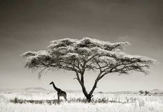 Wildlife Photography Tips & Post-Processing in Lightroom. Wildlife Photographer: Andy Biggs.