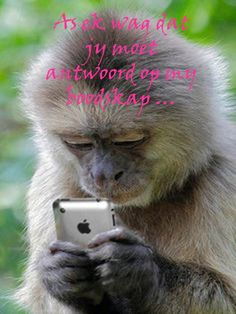 48 New Ideas Funny Animals Selfies Pictures Cute Funny Animals, Cute Baby Animals, Animals And Pets, Monkey Pictures, Funny Animal Pictures, Sacred Spirit, Humor Animal, Tiny Monkey, Photo To Art