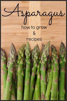 Asparagus - how to grow & recipes Hey, did you know (I didn't) asparagus is a ….