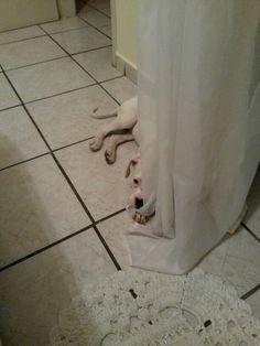 Minha cortina já era...