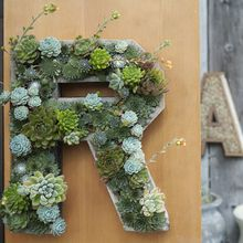 Succulent Letters and Numbers - Flora Grubb Gardens