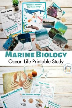 Ocean Science Activities are a perfect way to spend time learning during the summer or for a fun ocean theme.Here is fantastic Under the Sea Activities for Kids. Including sea shell sorting activities, ocean zones for kids, Science experiments for Kids and Ocean Activities for Kids, An AMAZING Ocean Unit Study #kindergarten #oceantheme #underthesea