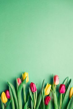 Tulips by Ruth Black for Stocksy United - Wallpaper - Blumen Iphone Spring Wallpaper, Frühling Wallpaper, Flower Background Wallpaper, Flower Phone Wallpaper, Cute Wallpaper Backgrounds, Cellphone Wallpaper, Flower Backgrounds, Cute Wallpapers, Rose Background