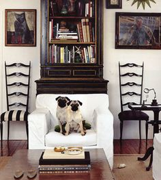 Photo Blog Suzanne Dimma Living With Pets Chairs
