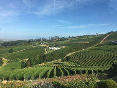 Constantia Boulder Beach, Cape Town, Bouldering, South Africa, Vineyard, Outdoor, Outdoors, Vine Yard, Vineyard Vines