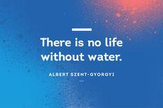 #AlbertSzentGyorgyi