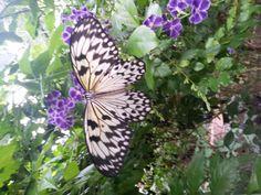 Family Excursion: Butterfly World in Stellenbosch