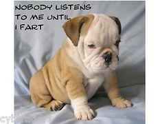 British Bulldog Puppy Funny Refrigerator Tool Box Magnet | eBay