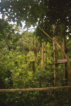 Indonesia Sumatra Bukit Lawang the rehabilitation center for Orang Utan´s
