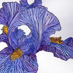 Bearded Iris, 2013 by Irene MacKenzie Linocut