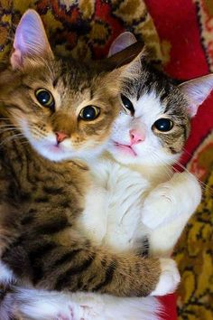Pin By Jan Fogle On Cats Pinterest Cat Dog And Animal - The internet has fallen in love with zo the cat that wears her heart on her chest