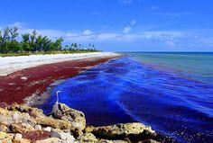 Reino Monera: Maré vermelha