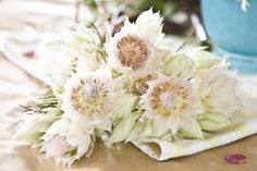 Wedding Flower Feature ✈ Powerful Proteas