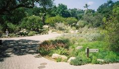 Hike and picnic in the Botanical Gardens  #SantaBarbaraHoliday