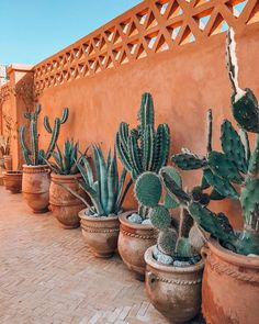 cactus in morocco