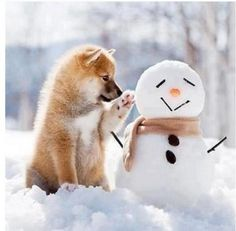 How adorable! #snow #dog -> Aaah