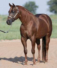 Loomis Ranch Reining Horses -  Topsail Whiz
