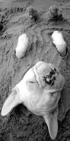 Beach baby playing in the sand! I need him in my life