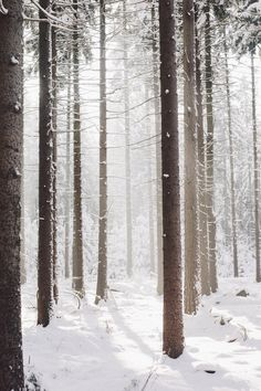 Winter forest  CLICK THIS PIN if you want to learn how you can EARN MONEY while surfing on Pinterest