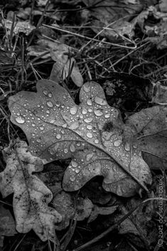 A leaf filled with water droplets, that I found on my travels. This taught me an important lessons with my photography. Sometimes we need to look a little lower for inspiration, for our photography. #blackandwhite #photography #bwphoto #bwphotography #photoshootideas #leaf #dorset Bw Photography, Water Droplets, The Funny, Comedy, Creativity, That Look, Leaves, Photoshoot, Wall