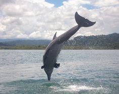... - Jpeg Dolphin Facts Big Dolphin 10 Interesting Bottlenose Dolphin
