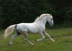 Orlov Trotter - http://horsebreedsinfo.com/Orlov-Trotter-pictures,-video,-and-information.html