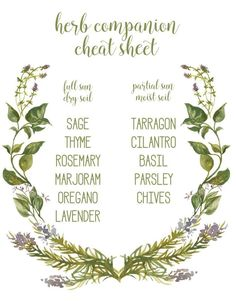 herb companion cheat sheet free printable for gardening