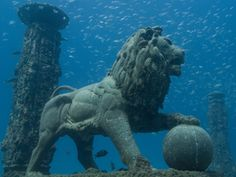 Neptune Memorial Reef, Florida's underwater cemetery. First of its kind.
