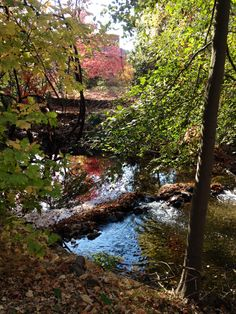 Chico State University! Closest lovely creek/river to take a walk by and enjoy nature!