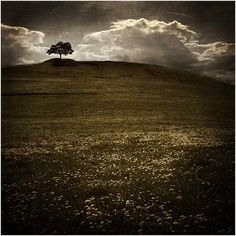 My brother took a picture like this but with three lone trees.  He is brilliant!