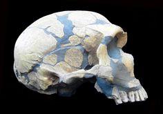 Homo Neanderthalensis/La Ferrassie, France by Desc/Em via Flickr.