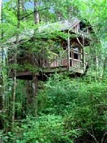 Edisto River Tree Houses! It's a 13 mile canoe/kayak self guided trip to get to them they are very secluded. Might be my next vacation!