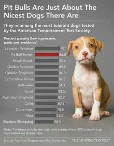 PITBULLS are just about the nicest dogs there are! Rescue one and change your life for the better - forever.