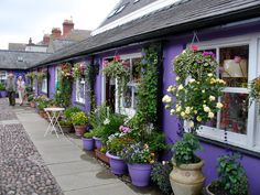 Flower Shops in Wales -- love to go to work there every day!!