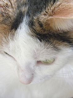 """""""When you're used to hearing the sound of purring and suddenly it's gone, it's hard to silence the blaring sound of loneliness."""" --Missy Altijd"""