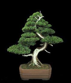 Bonsai in Bloom These are small trees. Culture of growing bonsai tree is a very long time - the Japanese were engaged in this century. Juniper Bonsai, Maple Bonsai, Pine Bonsai, Garden Terrarium, Bonsai Garden, Ikebana, Mini Plantas, Japanese Bonsai Tree, Plantas Bonsai