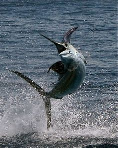 Los Suenos, Costa Rica. We went deep sea fishing - it was rough that day, but what an experience. My friend Kim caught a Blue Marlin.