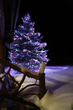 Christmas tree and lights in the snow