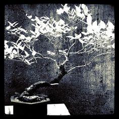 Bonsai at the Botanical Gardens