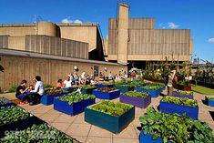 Emelt ágyás zöldségtermesztésre - Szép Házak Online
