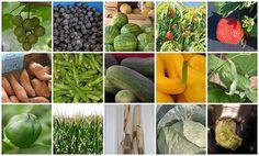 One Fabulous Mama- A seasonal guide to Georgia grown fruits and vegetables!