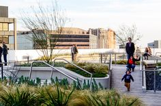 816 Congress Roof Transformation | Austin, Texas | Dwg. Urban Landscape  Architecture #roof