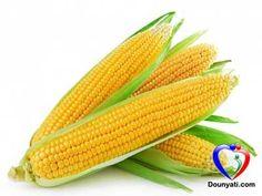 دنيتي | طب الاعشاب | فوائد الذرة متعددة للصحة وتشمل الوقاية من السرطان والسكري وغيرها و تحتوي على العديد من القيم الغذائية و المعادن و الفيتامينات
