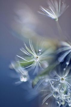 Art42 - Beautiful Pictures