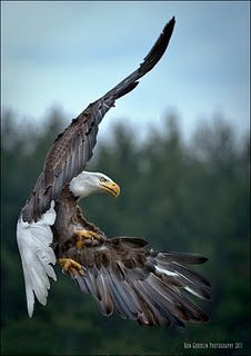 Eagles come in all shapes and sizes, but you will recognize them chiefly by their attitudes. E. F. Schumacher