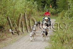Wildlife experiences in Finnish nature Nature Animals, Finland, Tourism, Wildlife, Inspiration, Turismo, Biblical Inspiration, Inspirational, Vacations