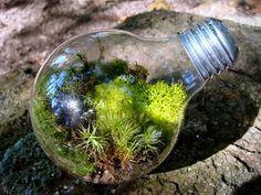 """Moss terrarium in a light bulb...that's really """"going green"""""""